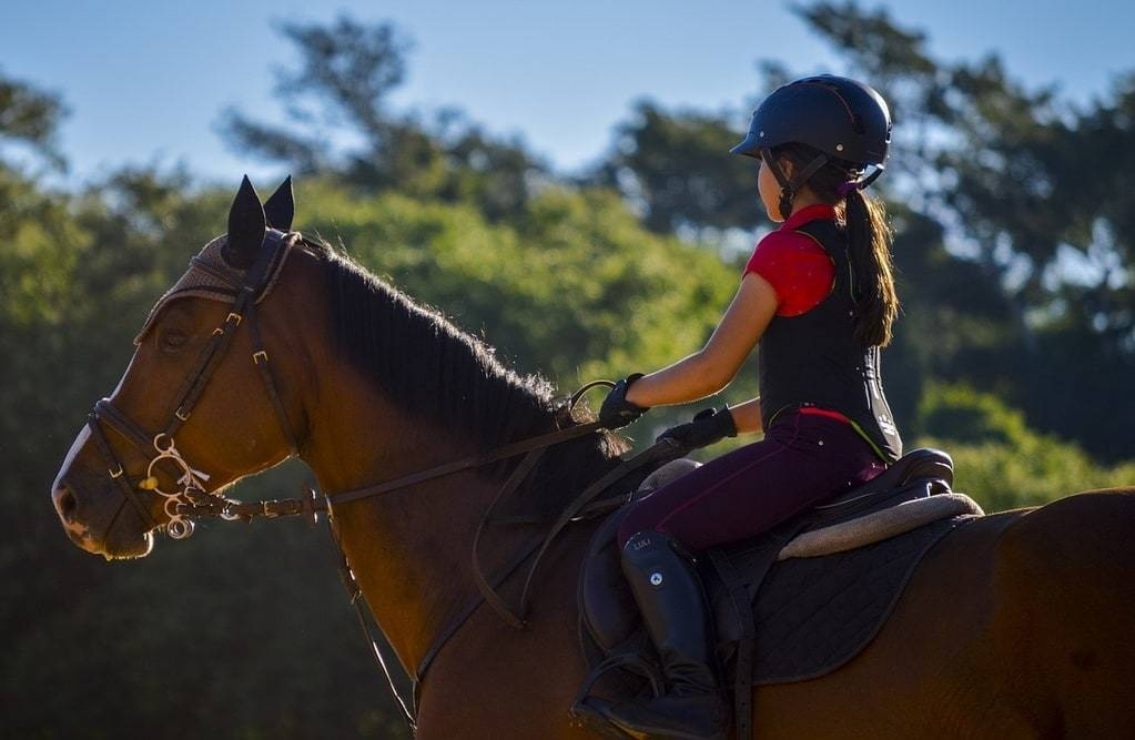 Le cheval est fragile, quels sont les points les plus sensibles ?